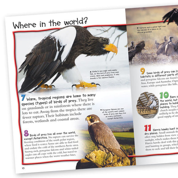 100 Facts Birds of Prey