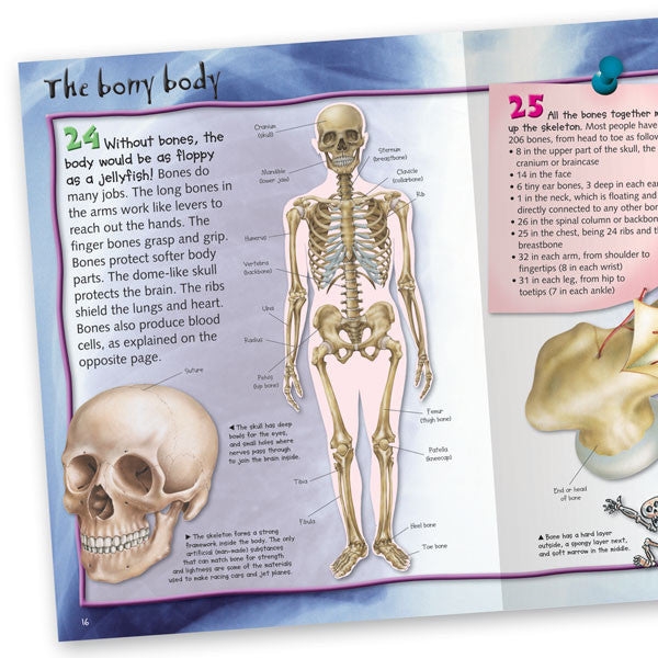 100 Facts Human Body Book For Kids Miles Kelly