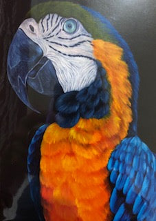 Orange Blue Parrot Card