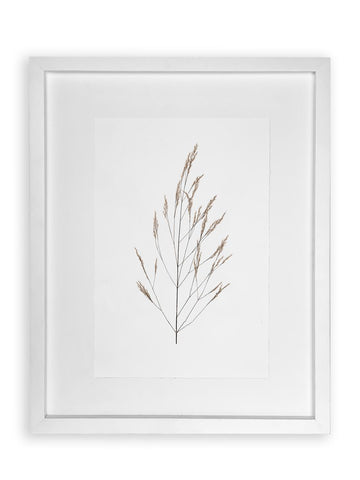 Wheat Form Study Photograph