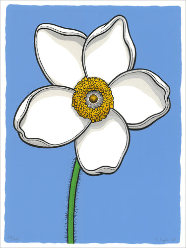Scott Teplin: Sundrop Windflower