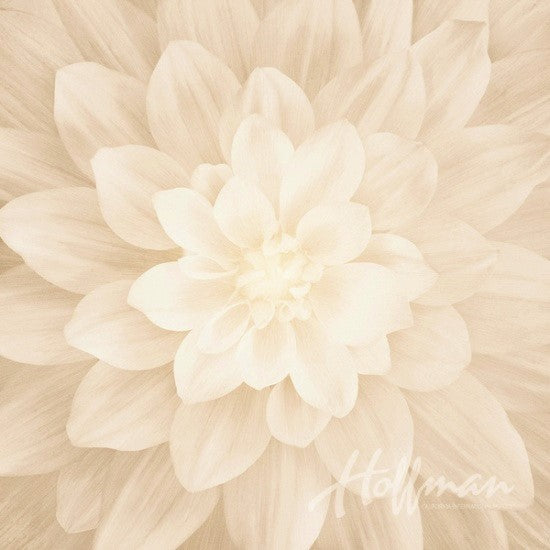 "Hoffman Dream Big 4389 22 Flora Ivory 43"" Panel By The Panel (not by the yard)"