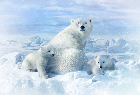 "Hoffman Digital Print Call Of The Wild 4560 307 Snow Polar Bears 28"" Panel By the Panel (not by the yard)"