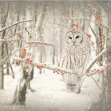 "Hoffman Call Of The Wild 4722 126 Birch Owl 30"" Panel By the Panel (not by the yard)"