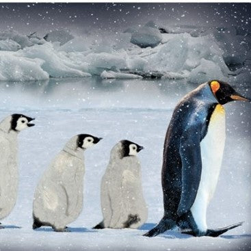 "Hoffman Digital Print Call Of The Wild 4740 621 Arctic Blue Penguins 29"" Panel By the Panel (not by the yard)"