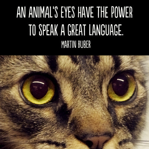 Animal Eyes quote by Martin Buber
