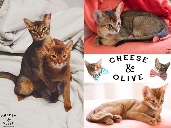 Cheese & Olive Cat Photo