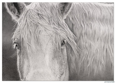 Horse With No Name by Jennie Norris - Pencil Drawing