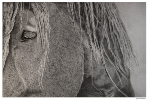 King by Jennie Norris - Graphite drawing close up of horse