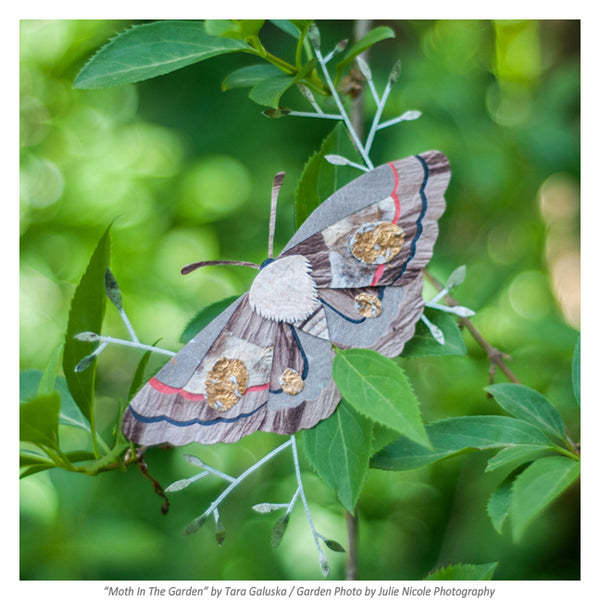 Moth In The Garden Credit Julie Nicole Photography