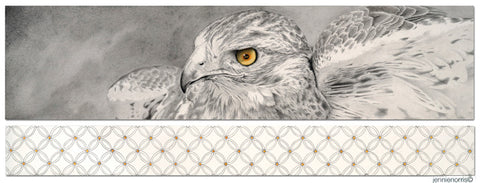 Red Tail Hawk by Jennie Norris - Graphite Drawing