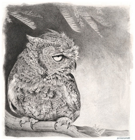 Western Screech Owl by Jennie Norris - Graphite drawing