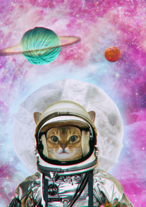 AstroCat by Cheese & Olive