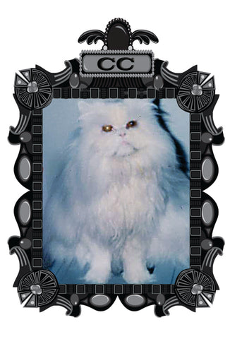 white persian original outlaw kitty