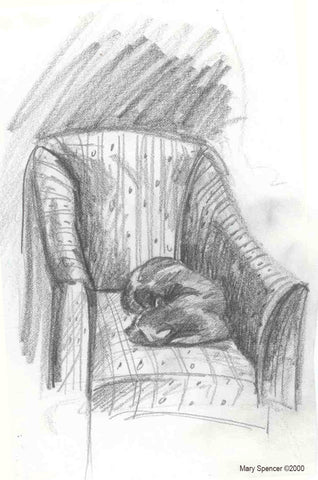 Cat sleeping in chair