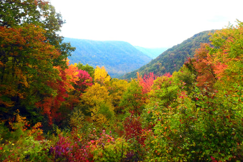 Fall Colors in the New River Gorge