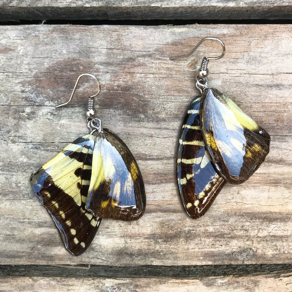 Sunkissed Hand Painted Butterfly Wing Earrings