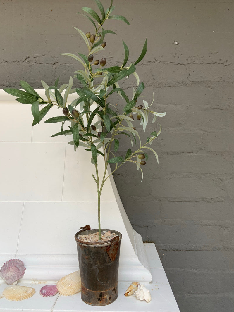 NS Vintage Pail with Olive Tree