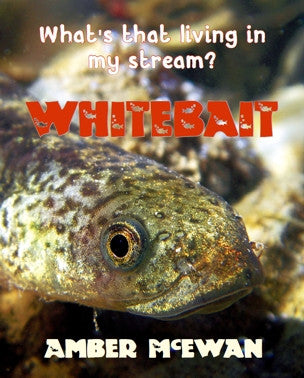 What's that living in my Stream? Whitebait by Amber McEwan