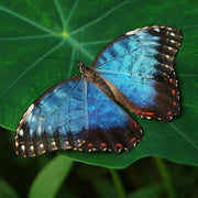 butterfly inspiration | blue