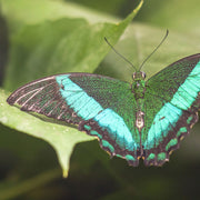butterfly inspiration | green