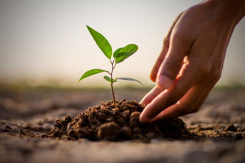 Image of hands planting a tree