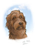 portrait custom portrait pet portrait dog portrait cat portrait pencil portrait family portrait illustrated portait