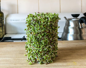 What are Broccoli Sprouts and How Do I Grow Them? Naked Paleo Blog - Dan Barrel One Coffee Roasters