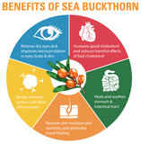 BHK's Sea Buckthorn Oil Softgels【Cellular Health】⭐沙棘果油 軟膠囊 - Bluemoon Secrets Chamber