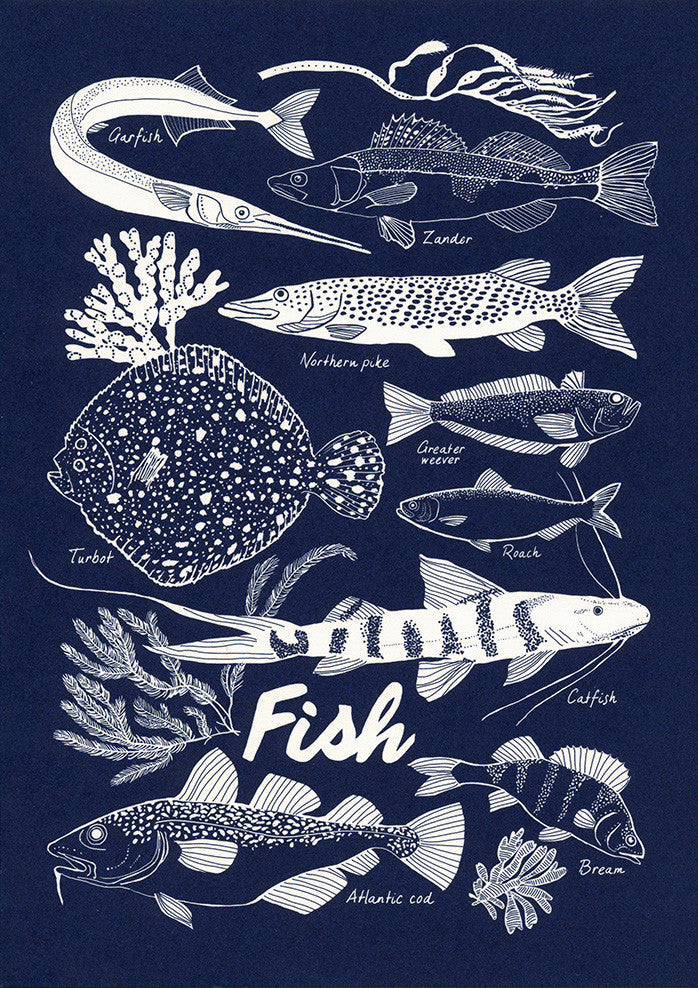 Postcard - Nature - Fish