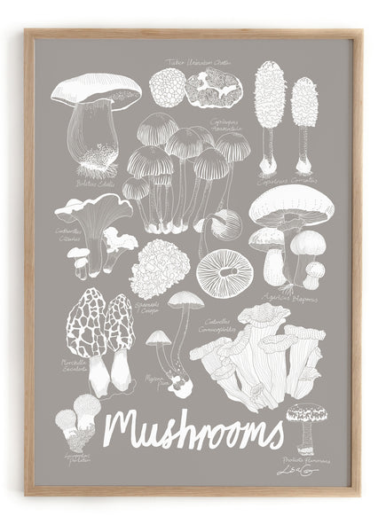 WE LOVE NATURE - Mushrooms