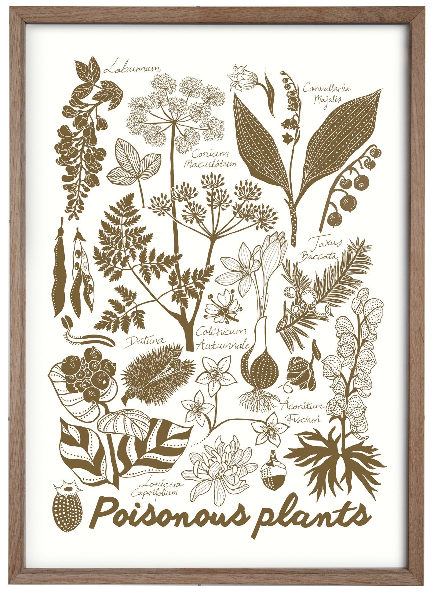 poisonous plants / print
