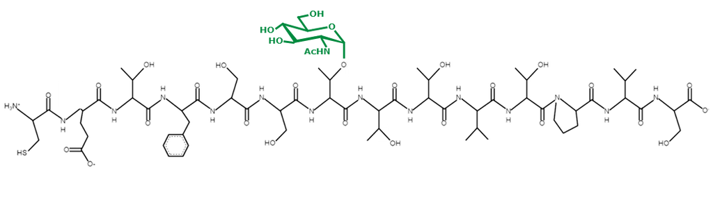We have other glycopeptides and peptides that correspond to our O-GlcNAc specific antibodies. Please contact us if you are interested in ordering.