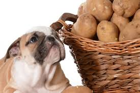 Health Benefits Of Sweet Potato For Dogs