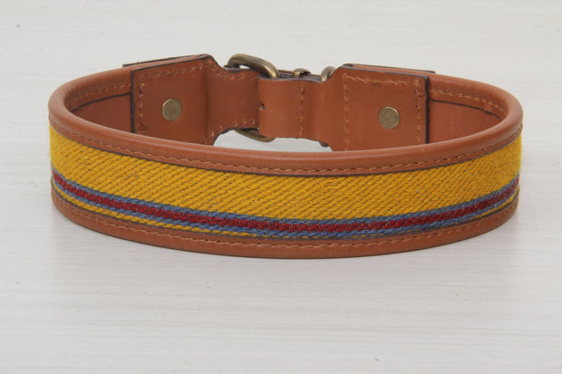 Yellow Dog Collar
