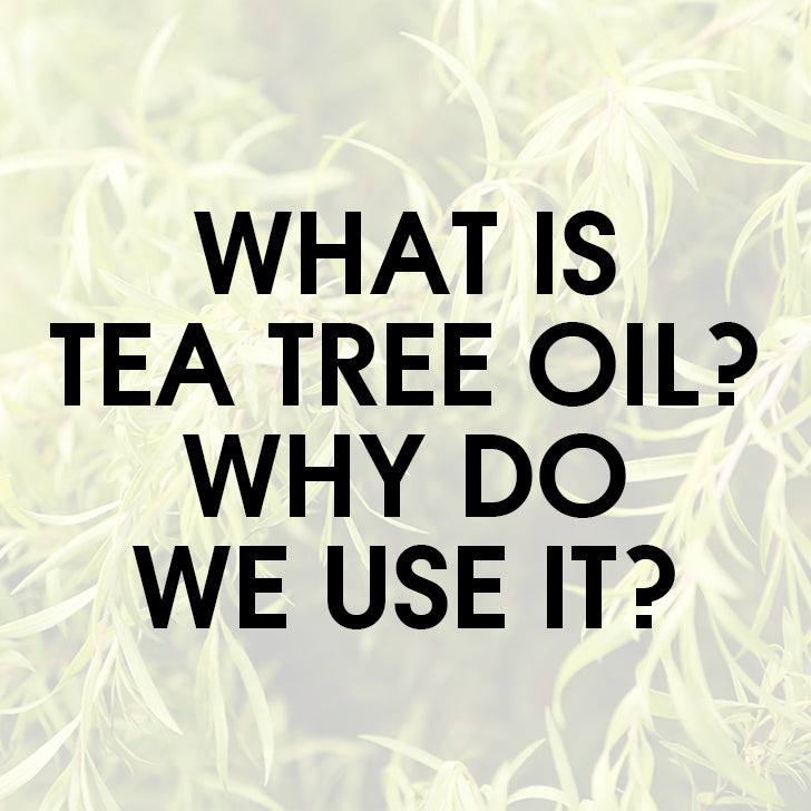 What is Tea Tree and why do we use it?