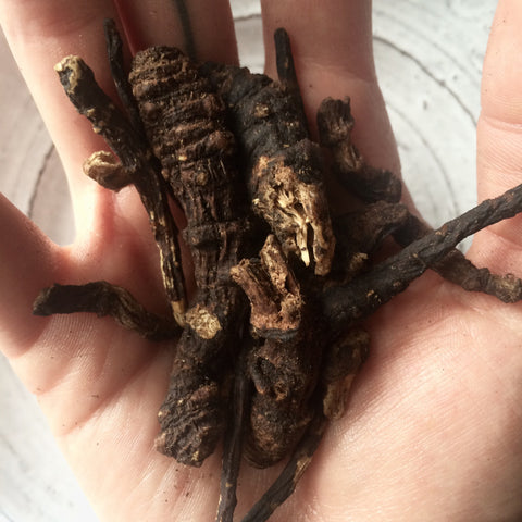 what is osha root