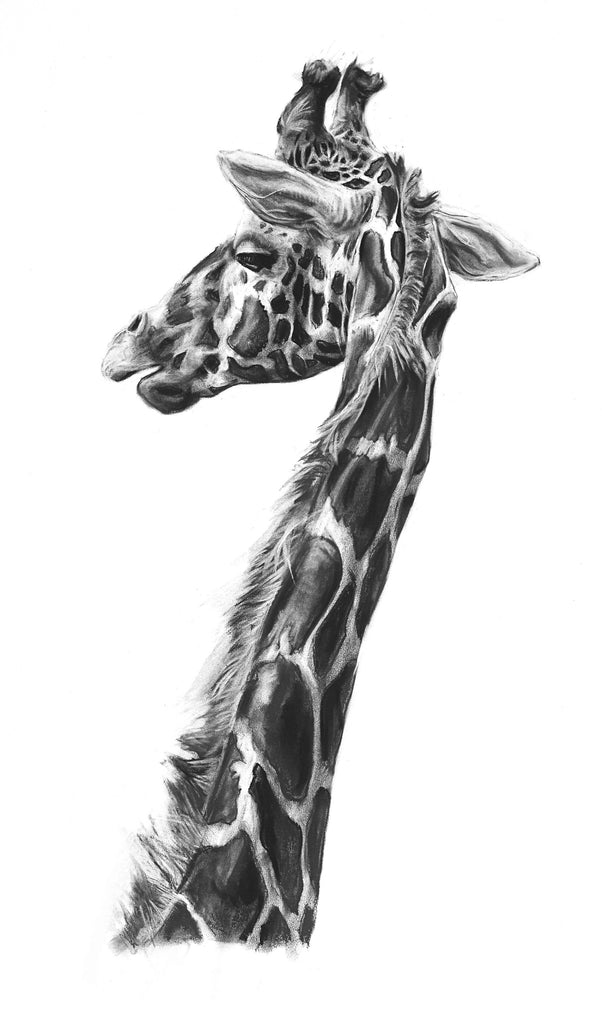 Giraffe giclee print of a charcoal drawing by Lucy Boydell