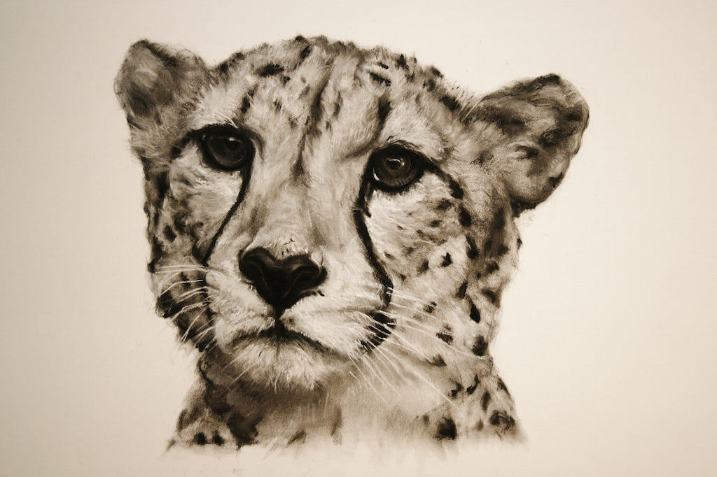Cheetah giclee print of a charcoal drawing by Lucy Boydell