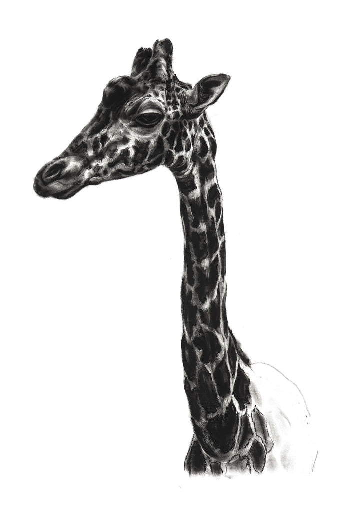 Young Giraffe giclee print of a charcoal drawing by Lucy Boydell