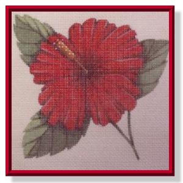 Red Hibiscus-CD211