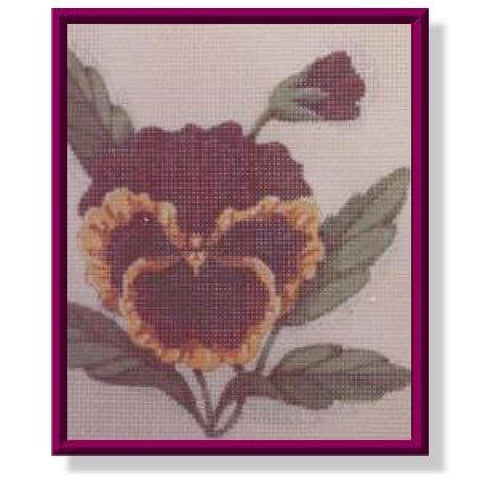 Burgundy Pansy-CD213