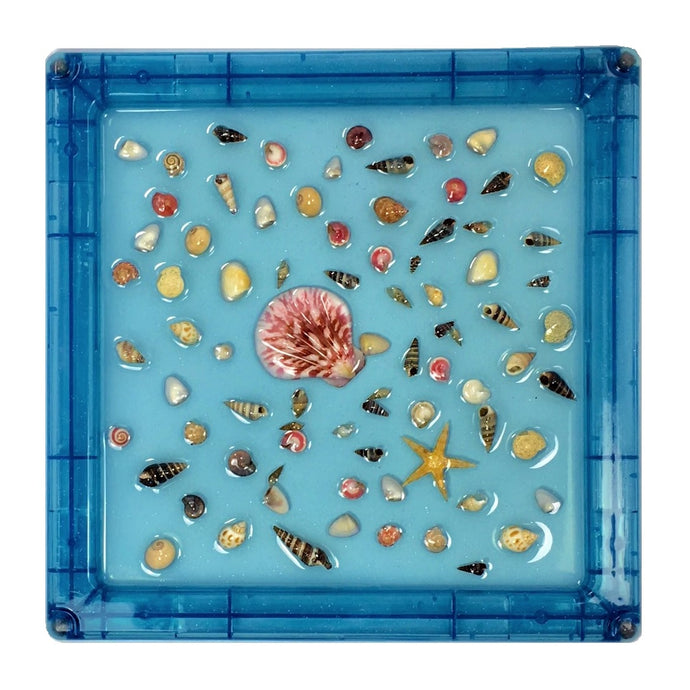 *NEW!* Sensory Sea Shell Panel