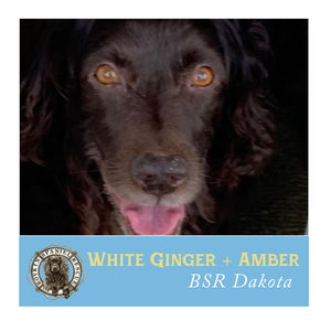 Dakota's White Ginger & Amber