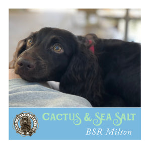 Milton's Cactus & Sea Salt