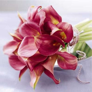 Bliss - Exotic Calla Lily - Daisy Chain Design Studio