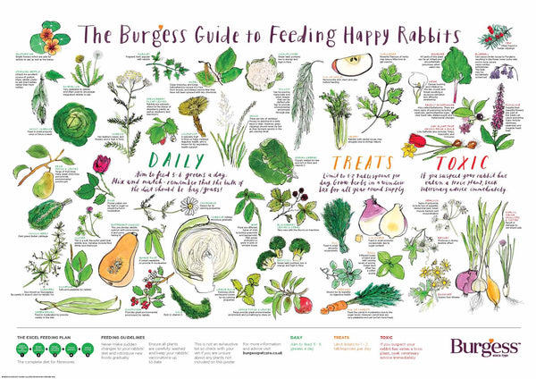 Burgess, Guide to feed your rabbit, poster, Mapology Guides