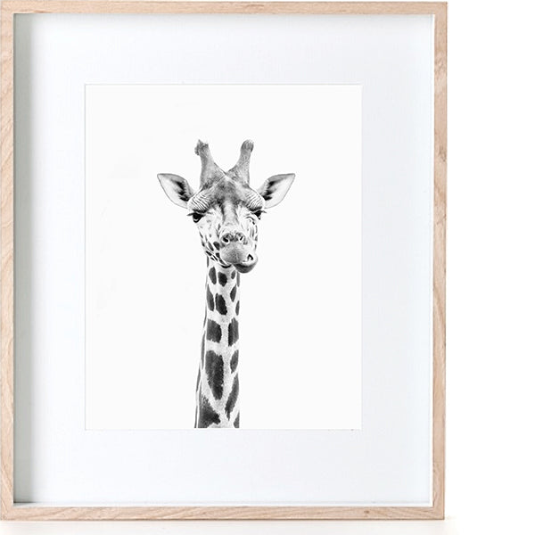 Print - Photographic Giraffe