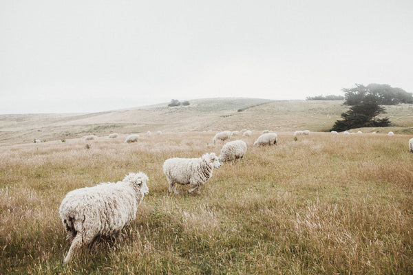Wool Country | New Zealand Series