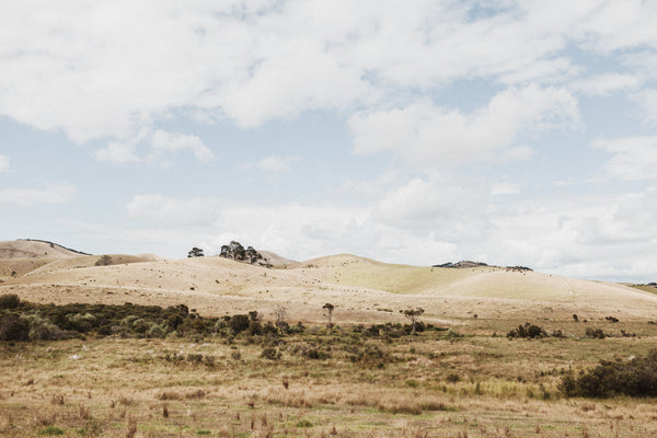 Dry Land | New Zealand Series